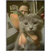 Adopt A Pet :: Gracie (mixed breed) - Owasso, OK