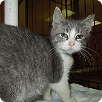 Adopt A Pet :: Ryan - Medina, OH