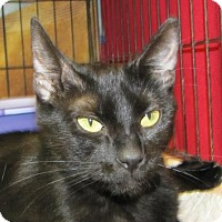 Adopt A Pet :: Fleayonce Knowles - Woodstock, IL