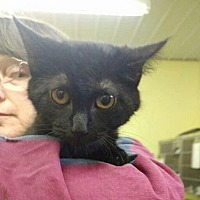 Adopt A Pet :: Greta - Trenton, MO