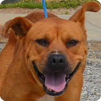 Adopt A Pet :: Willow - Auburn, MA