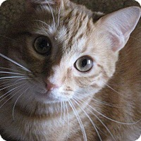 Adopt A Pet :: Oliver (COURTESY POST) - Baltimore, MD