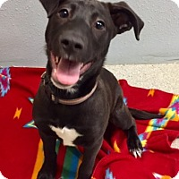 Adopt A Pet :: JOHNNY - Newport, OR