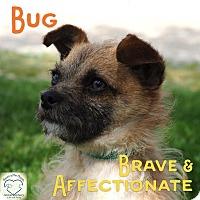 Adopt A Pet :: Bug - Washburn, MO
