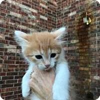 Adopt A Pet :: Andy - McKinney, TX