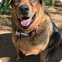 Adopt A Pet :: OSO - Studio City, CA