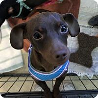 Adopt A Pet :: Coco - Fallbrook, CA