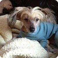 Adopt A Pet :: Gromit (ME) - Gilford, NH