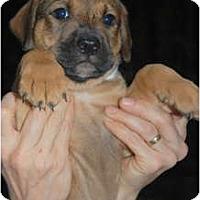Adopt A Pet :: Isaac - Douglasville, GA