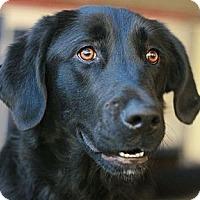 Adopt A Pet :: Ada - Canoga Park, CA