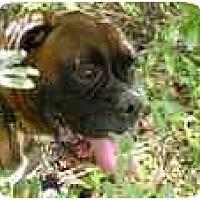Adopt A Pet :: Broudy - Albany, GA
