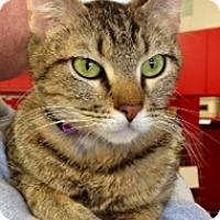 Adopt A Pet :: Zabel - Green Bay, WI