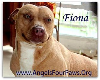 Pit Bull Terrier Dog for adoption in Humble, Texas - FIONA