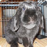 Adopt A Pet :: Delilah - Hahira, GA