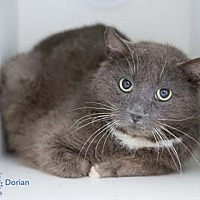 Adopt A Pet :: Dorian *Cross Post - Herndon, VA