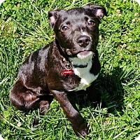 Adopt A Pet :: The Walking Dead Litter: Glen - Charlotte, NC