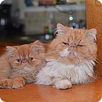 Adopt A Pet :: Sunny - Morgan Hill, CA