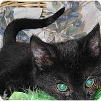 Adopt A Pet :: Shadow - Catasauqua, PA