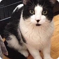 Adopt A Pet :: Lucas - Hamilton, ON