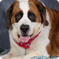 Adopt A Pet :: Cali - Glendale, AZ