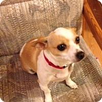 Adopt A Pet :: Butter - Seattle, WA
