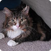 Adopt A Pet :: Pouncy - Winchendon, MA