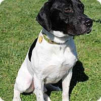 Adopt A Pet :: Walker ADOPTION PENDING - Waldorf, MD