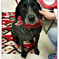 Adopt A Pet :: Grayson - Plainfield, IL