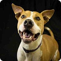 Adopt A Pet :: DIESEL - McKinleyville, CA