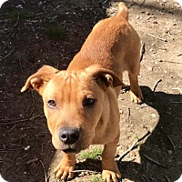 Adopt A Pet :: Dixon - Waldorf, MD