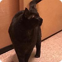 Adopt A Pet :: SAMSON - Modesto, CA