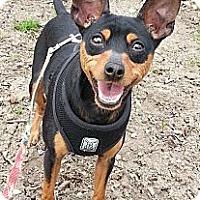 Adopt A Pet :: Mario - Rigaud, QC