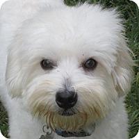 Adopt A Pet :: Garvey - La Costa, CA