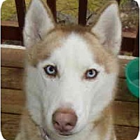 Adopt A Pet :: Hennesey - Kettle Falls, WA