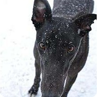 Adopt A Pet :: Amigo (Tomco Amigo) - Chagrin Falls, OH