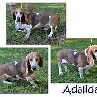 Adopt A Pet :: Adalida - Marietta, GA