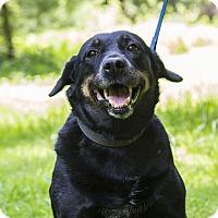 Adopt A Pet :: Faith - Cuddebackville, NY
