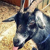 Adopt A Pet :: Matilda - Huguenot, NY