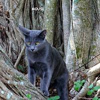 Adopt A Pet :: Mouse - Naples, FL
