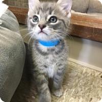Adopt A Pet :: Stevie - Medina, OH