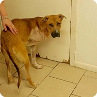 Adopt A Pet :: Zack - Natchitoches, LA