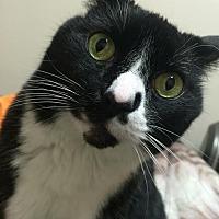 Adopt A Pet :: Willie - Mebane, NC