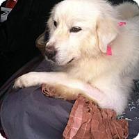 Adopt A Pet :: Baylee - Minneapolis, MN