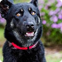 Adopt A Pet :: Imperial - San Diego, CA