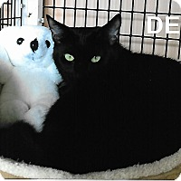 Adopt A Pet :: Del - Medway, MA
