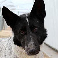 Adopt A Pet :: Blackberry - Colorado Springs, CO