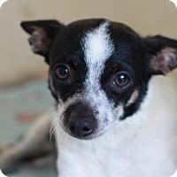 Adopt A Pet :: BELL - Kyle, TX