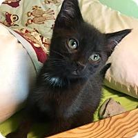 Adopt A Pet :: Bolt - Gainesville, FL