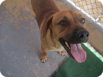 Hound (Unknown Type) Mix Dog for adoption in San Antonio, Texas - Donatello