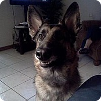 Adopt A Pet :: Libby - Green Cove Springs, FL